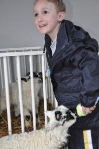 Bottlefeeding a lamb!
