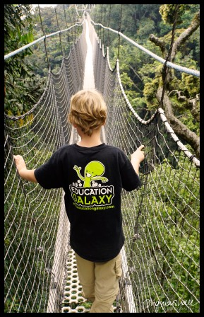 Walking the Canopy Walkway