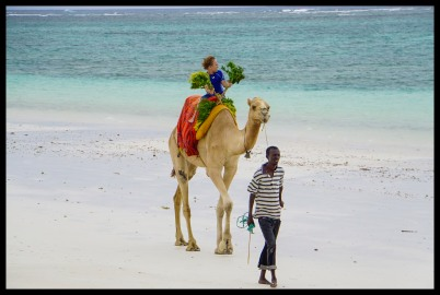 Camel ride on the beach