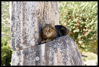 Ephesian Cat