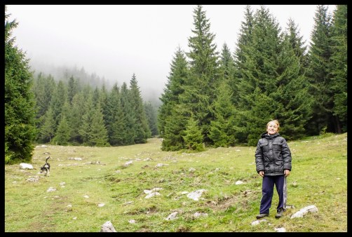 The forest of Piatra Craiului National Park