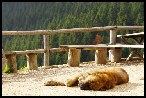 BIG. DOG. - Piatra Craiului National Park