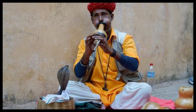 Jaipur - Amber Fort Snake Charmer