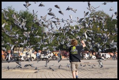Jaipur - Chasing birds!
