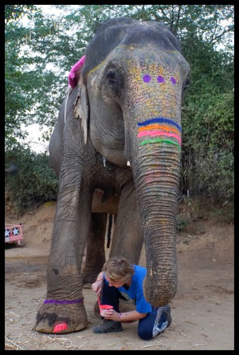 Jaipur - Elephant Painting!