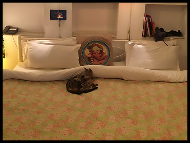 Pushkar - Cat on bed