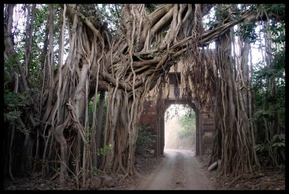 A tree tunnel!