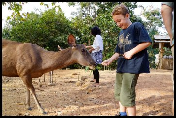 Feeding a Deer