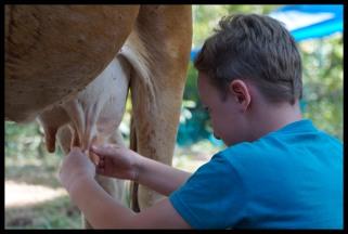 I milked a cow!!!