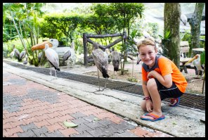 Huge Stork