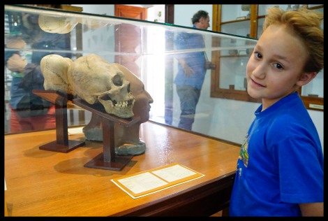 Formed skulls - Anthropology Museum