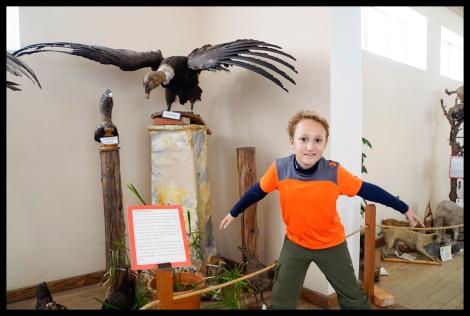 Condor - Natural History Museum