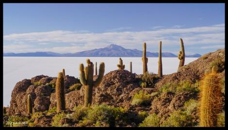 Fish Island or cactus island