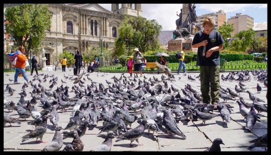 Also, fed some pigeons... of course!