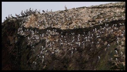 So many birds!!!
