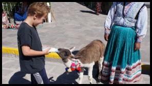 Got to feed a baby Llama!!!