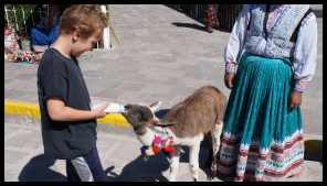 Got to feed a baby Llama!!!