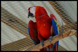 Majetic Macaw