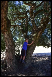 This is a cork tree. They are native to this part of Spain.