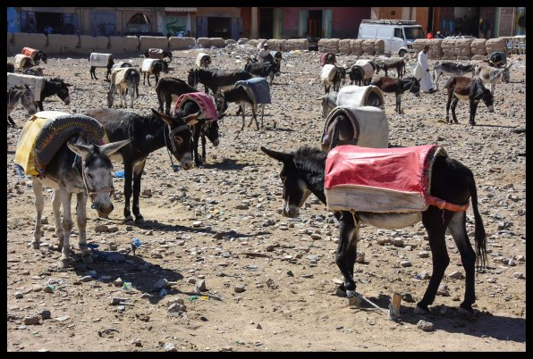 The donkey market