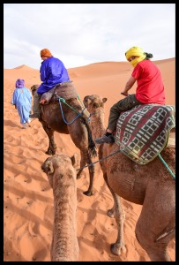 Camels into the desert!