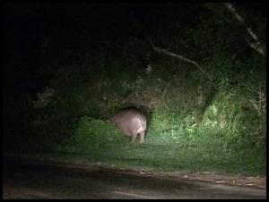 Hippo at night