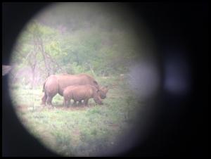 Rhino and baby through the binoculars