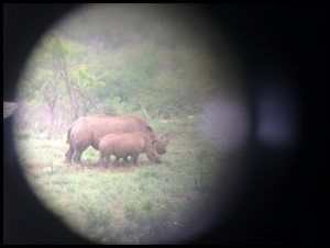 Rhino and baby through the binoculars